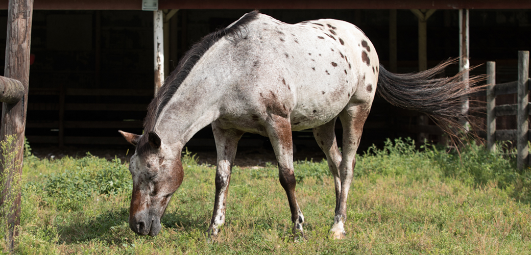 Horse on farm