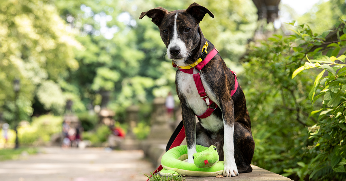What to Do During a Snake Encounter with Your Pets | ASPCA