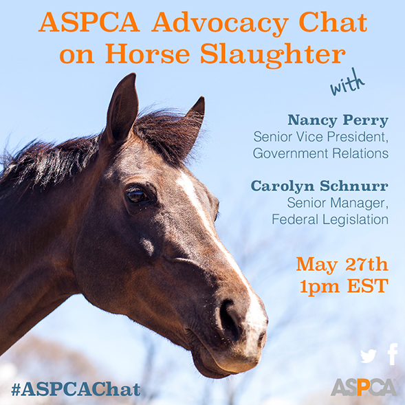 Did You Know Horses are Slaughtered in the U.S. Every Single Day? Join Our Twitter Chat to Learn More!