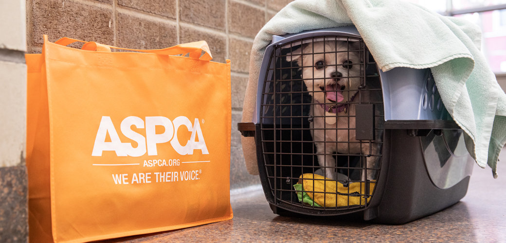Dog in crate with bag of emergency supplies