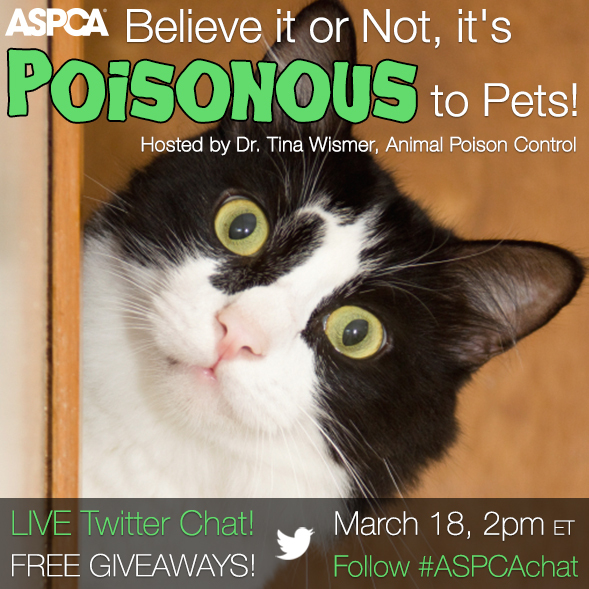 Do You Have Pet Poisons in Your Home? Join Our Twitter Chat to Find Out!