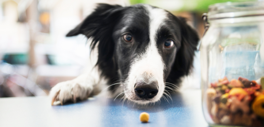 what is considered a balanced diet for pets
