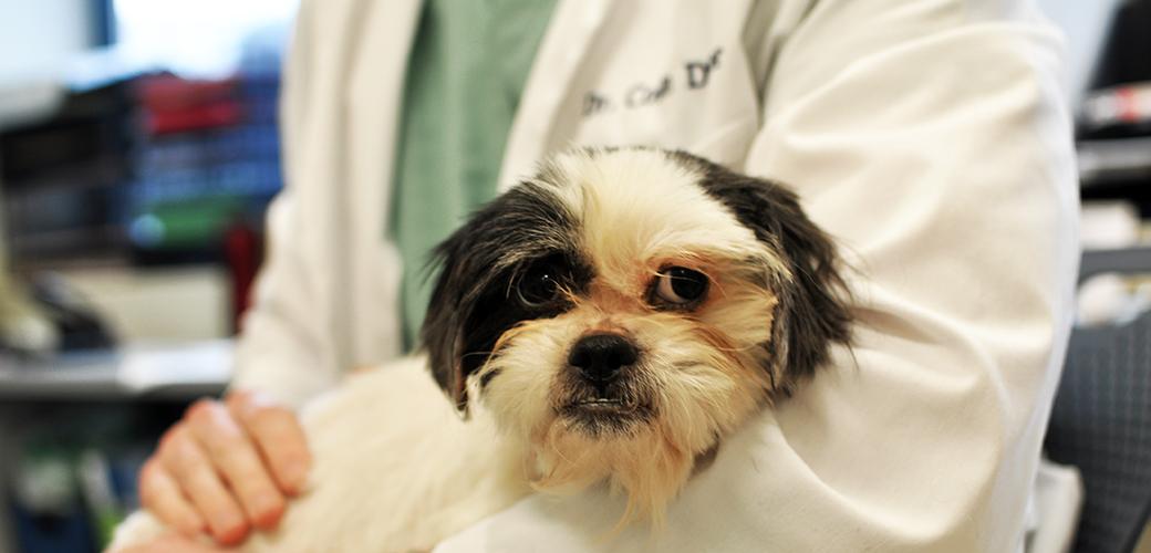 Common Dog Diseases | ASPCA
