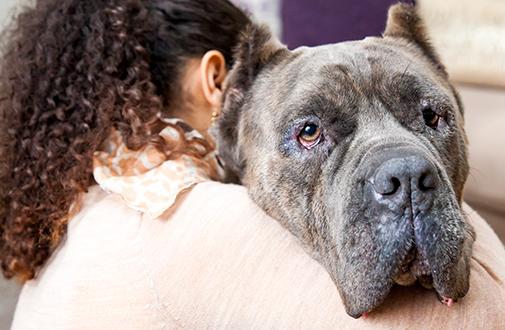 What Is Breed-Specific Legislation (BSL)? | ASPCA
