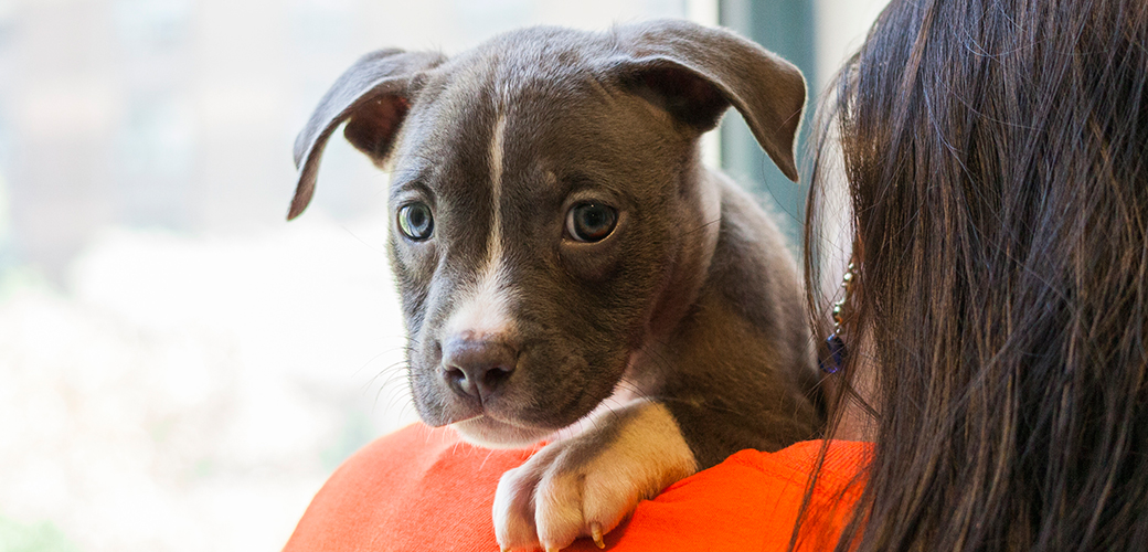 What Is Breed-Specific Legislation (BSL)? | ASPCA