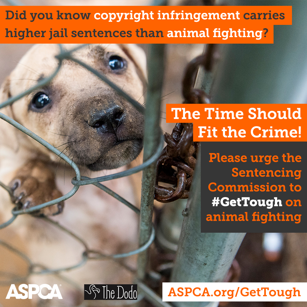 We Need Your Help! Now's Our Chance to #GetTough on Animal Fighting