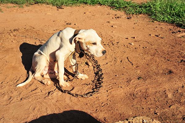 National Dog Fighting Awareness Day