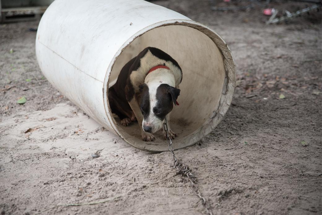 Dog hiding in barrel