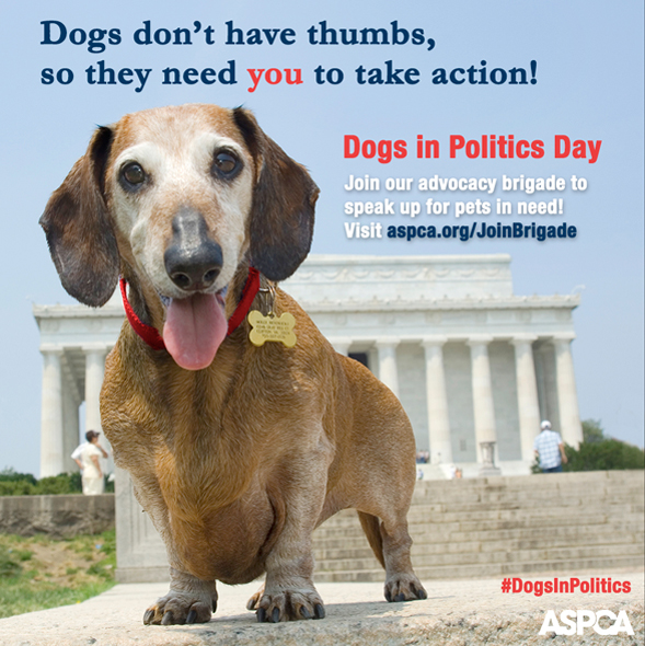 Dogs in Politics Day