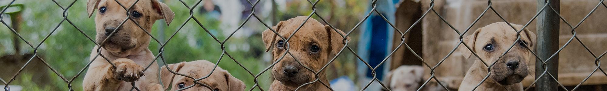 help the aspca put a stop to animal cruelty