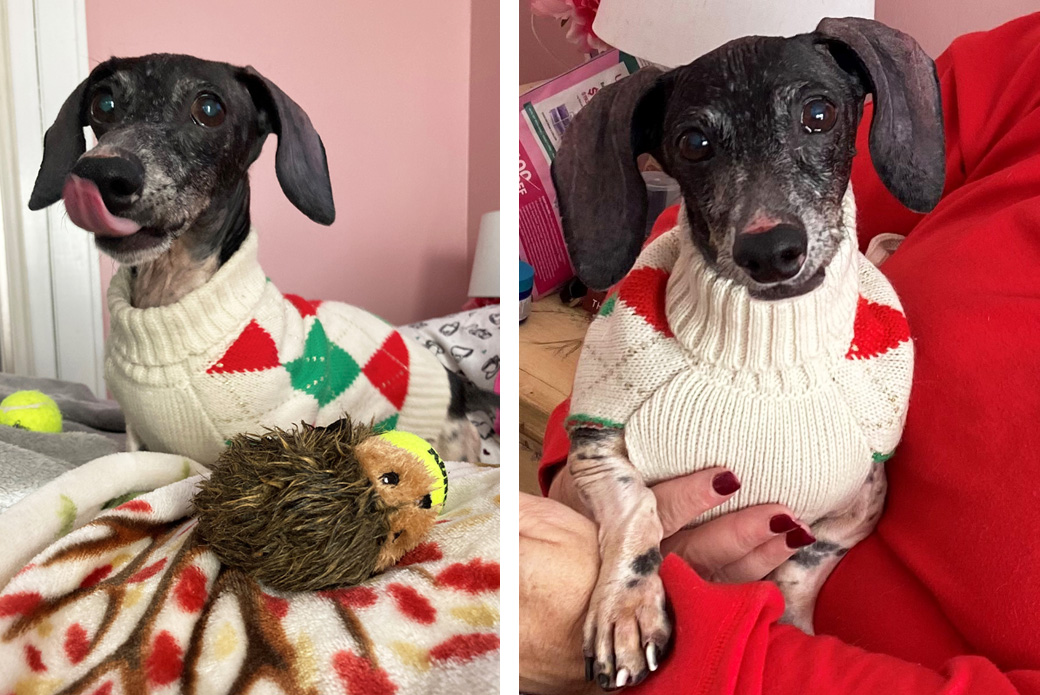 Buster at home wearing sweater