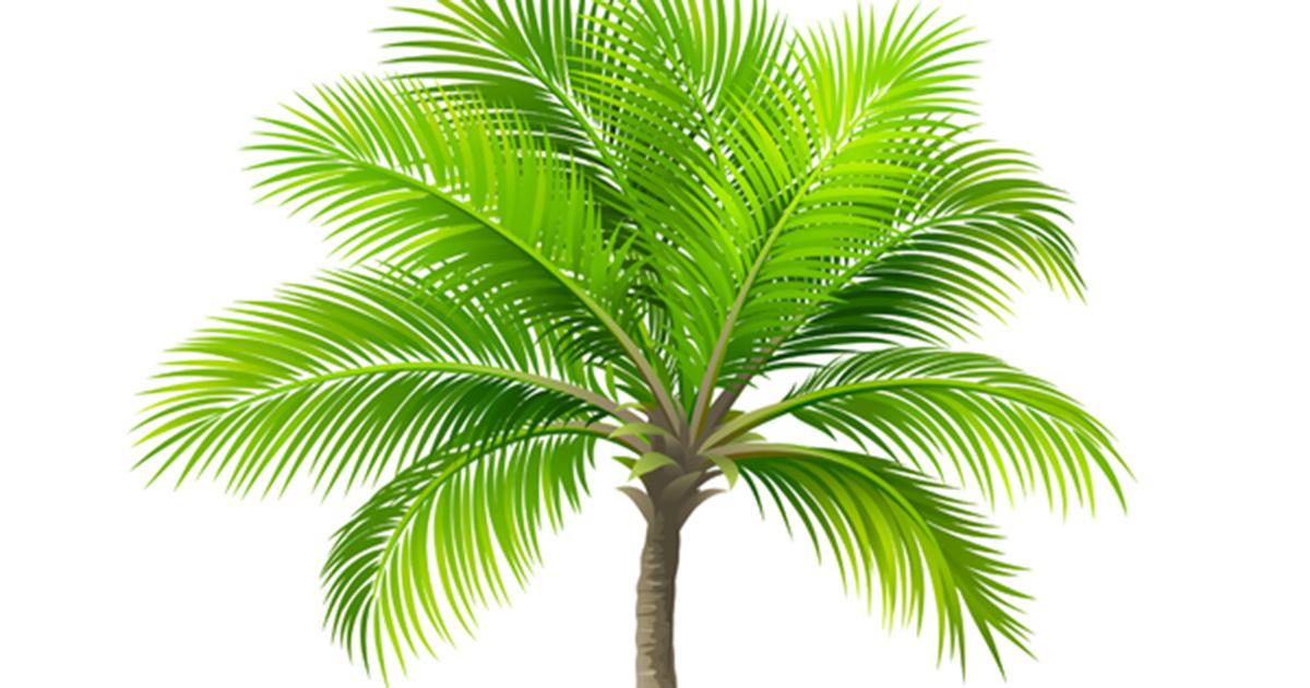 Dwarf Royal Palm Aspca