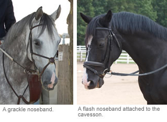 grackle and flash noseband
