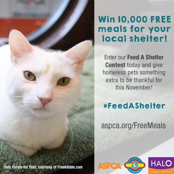 "Enter Our ""Feed a Shelter"" Contest and Win 10,000 Meals for Shelter Pets from Freekibble.com and Halo!"