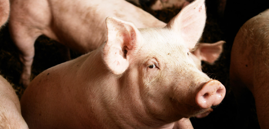 how to help animals in factory farms