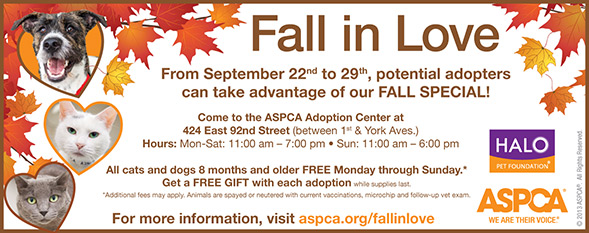 Fall in Love at the ASPCA