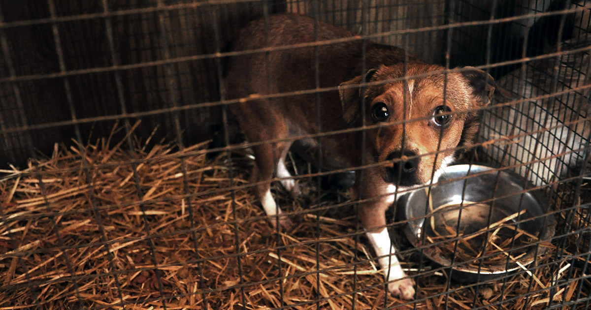 Barred From Love | Puppies | Federal Law | ASPCA