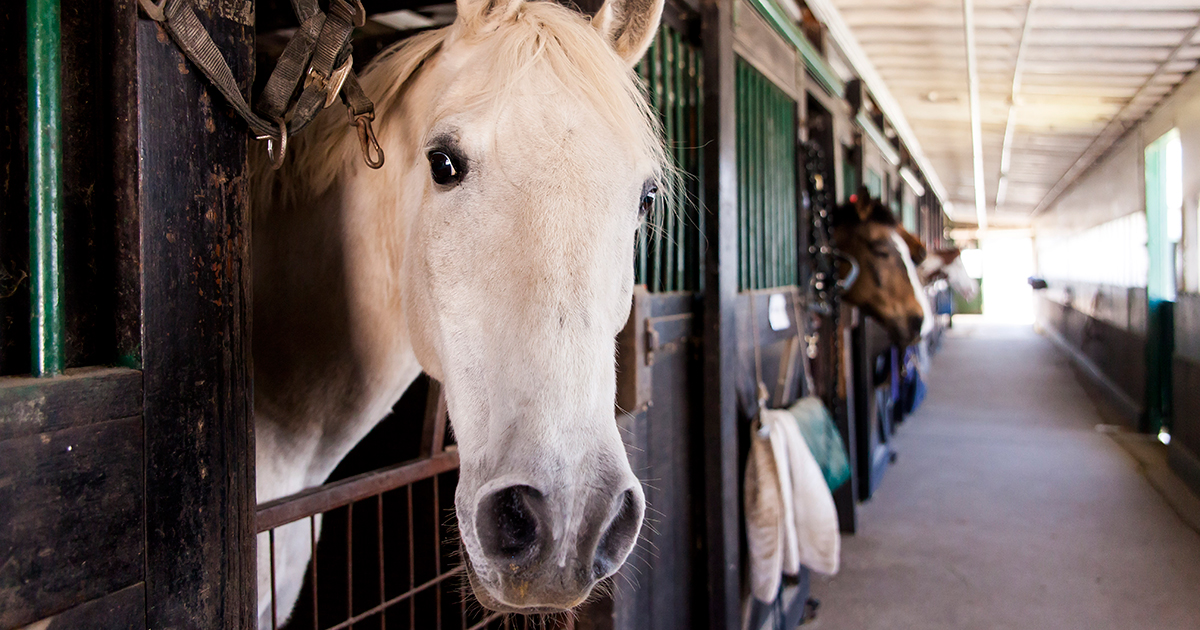 U s senate committee votes to prohibit horse slaughter on for American soil