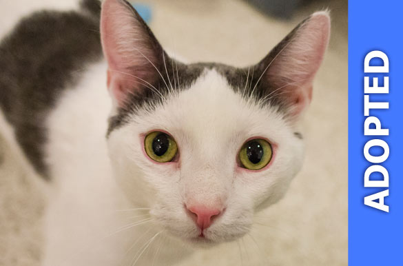 Angeli was adopted!