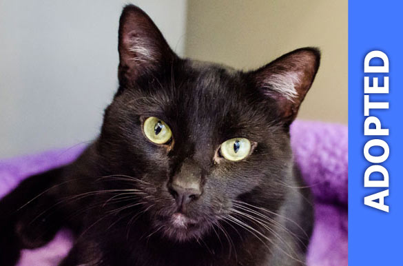 Babble was adopted!