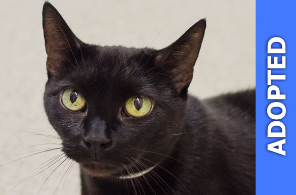 Bailee was adopted!