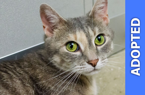 Barb was adopted!