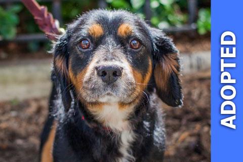 Bernard was adopted!