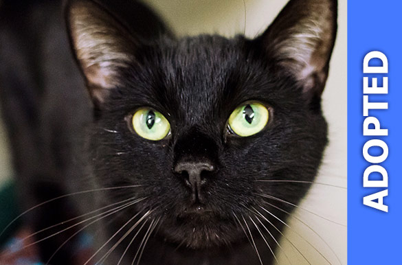 Blackberry was adopted!