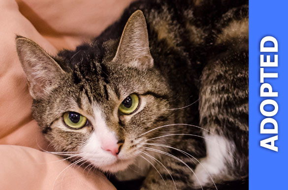 Bootsie was adopted!