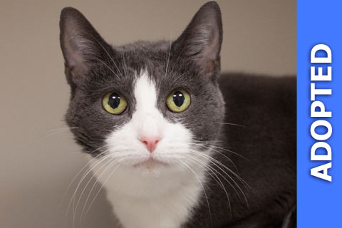 Candle Nut was adopted!