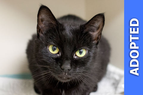 Cinder was adopted!