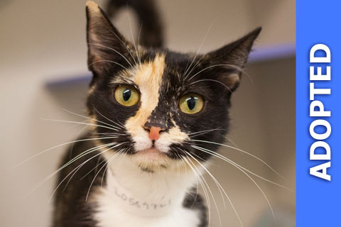 Cindy was adopted!