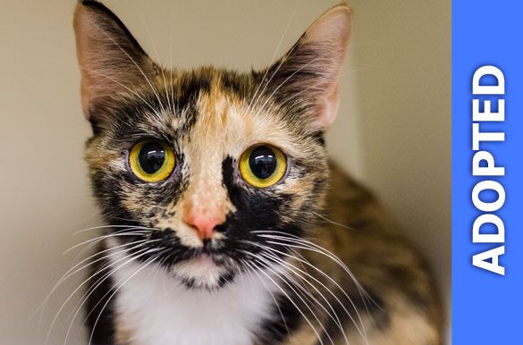Cleopatra was adopted!