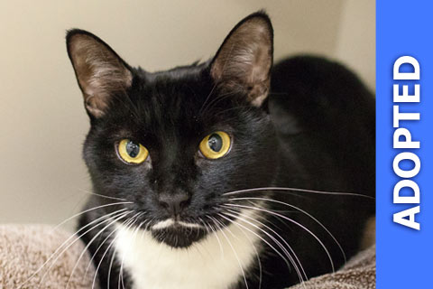 Collington was adopted!
