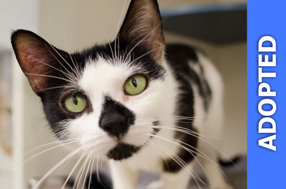 Constance was adopted!