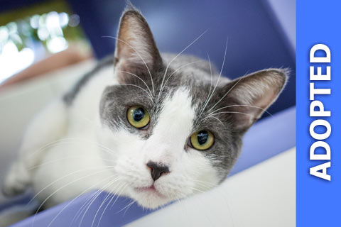 Couscous was adopted!