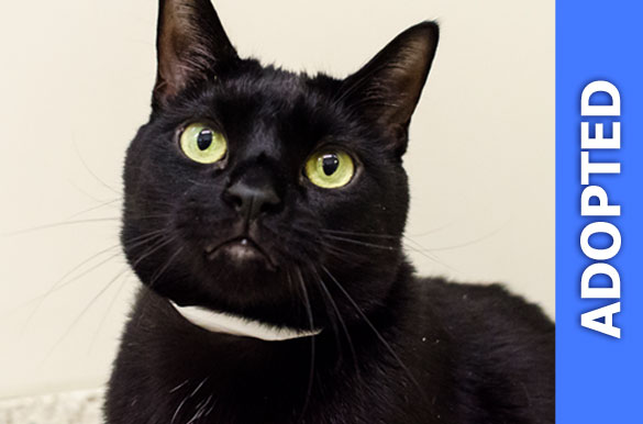Dante was adopted!