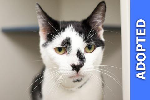 Deronda was adopted!