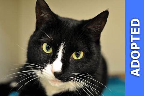 Eartha Kitt Cat was adopted!