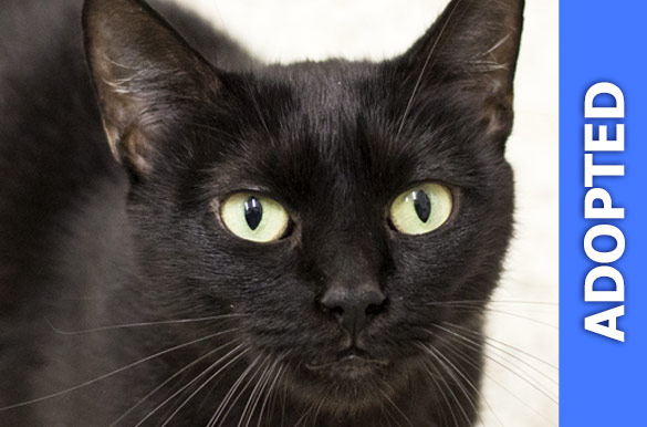Estelle was adopted!