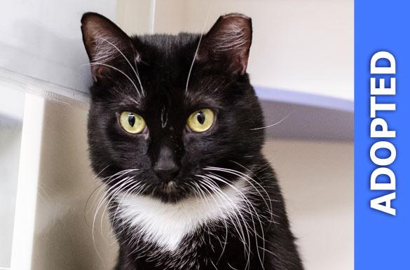 Felina was adopted!