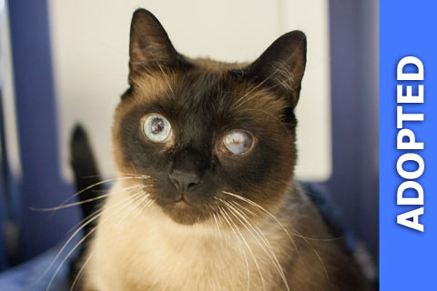 Frack was adopted!