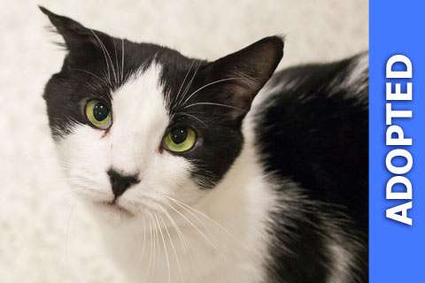 Humbert was adopted!