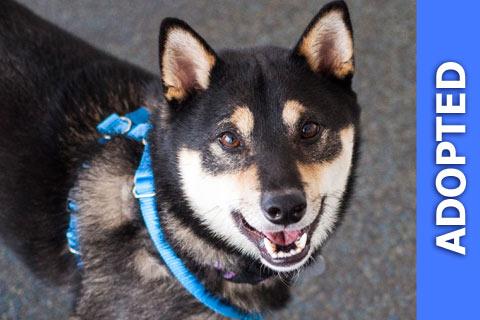 Hyru was adopted!