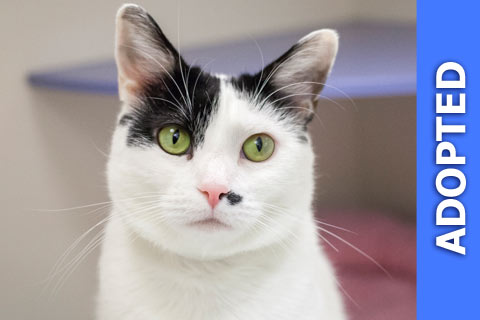 Jessa was adopted!