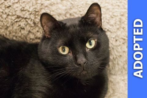 King was adopted!