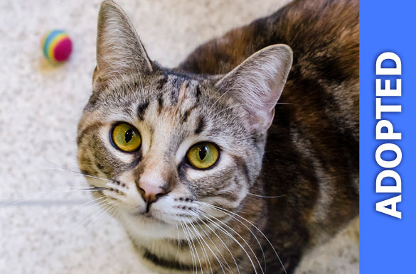Marcy was adopted!