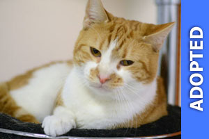 Montrose was adopted!