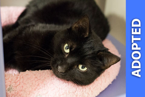 Noche was adopted!