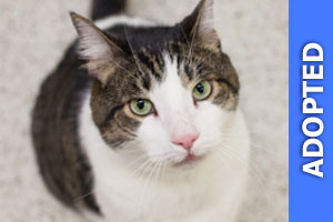 Obediah was adopted!